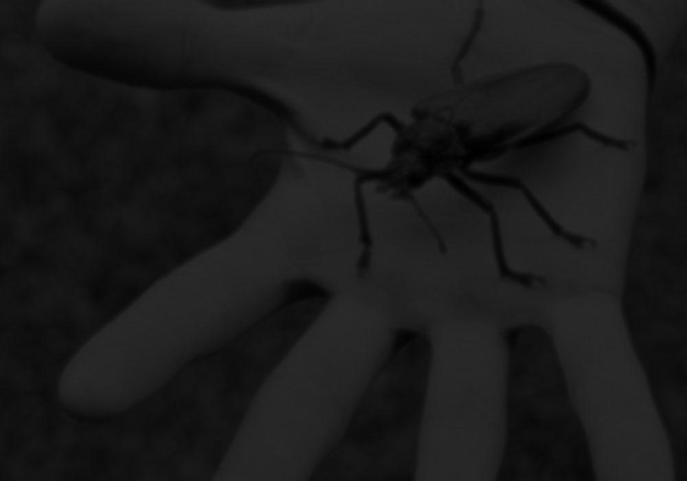 handbeetle-blur