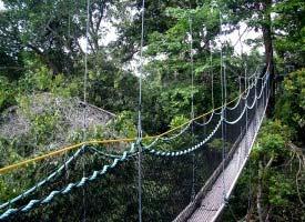 Iwokrama Canopy Walkway & Activities | Iwokrama River Lodge