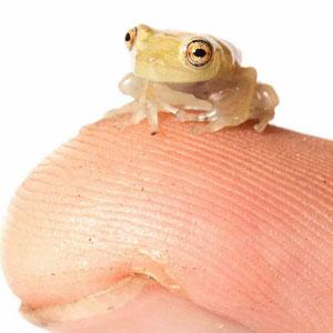 fingerfrog1